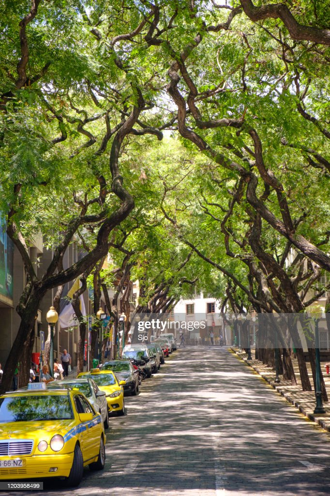 Avenida Zarco with overhanging trees in Funchal on Madeira island during a beautiful summer day : Stock Photo
