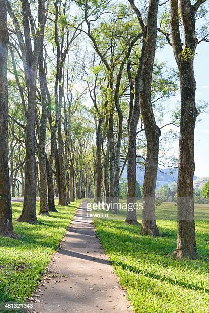 avenue and sunshine - leren stock pictures, royalty-free photos & images