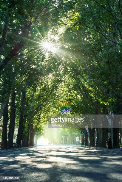 Avenue in Beijing on summer morning