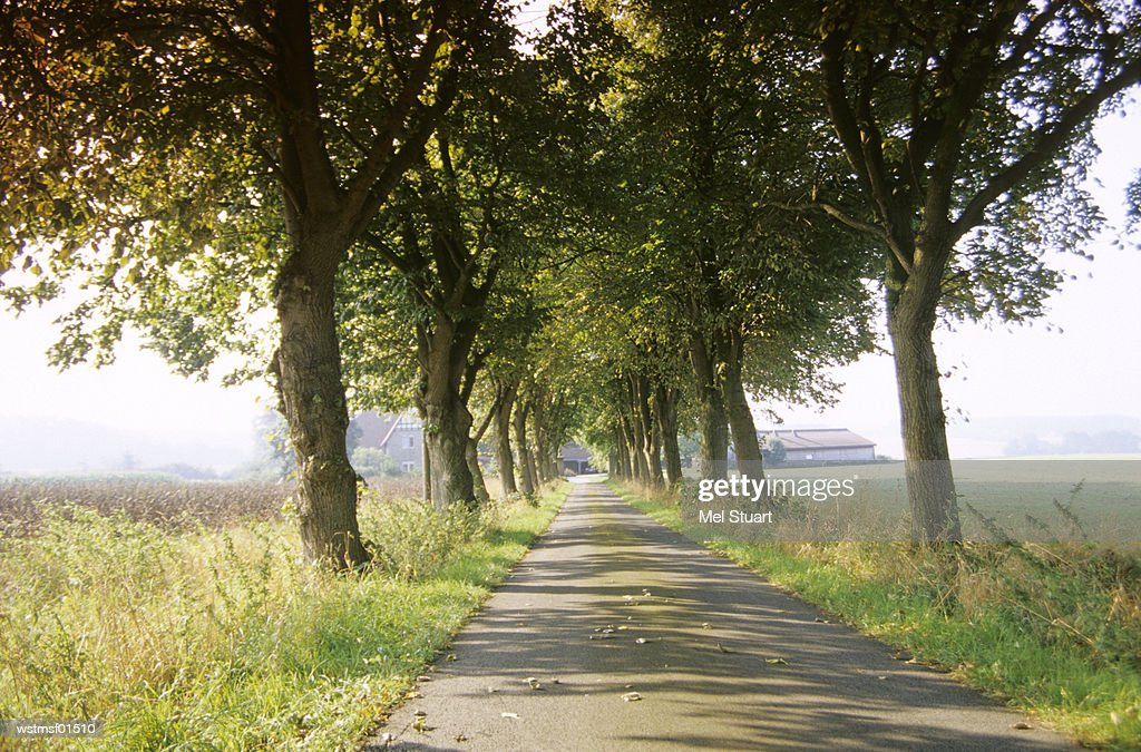 Avenue in Riemsloh, Osnabruecker country, Germany : Stock Photo