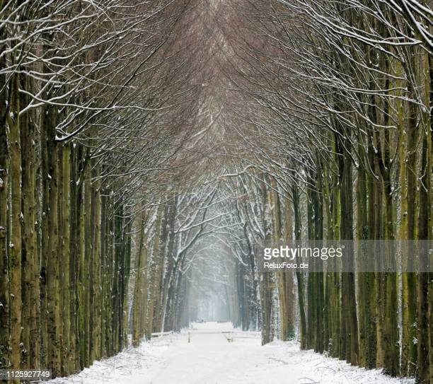 avenue in snow with tree trunks in a row - february stock pictures, royalty-free photos & images