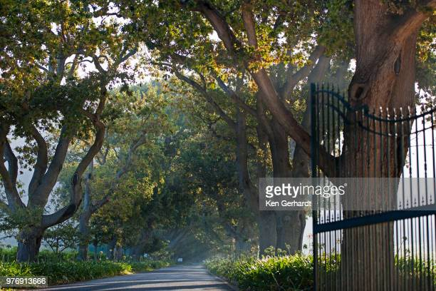 avenue leading up to buitenverwachting estate. constantia cape town. rsa - constantia stock pictures, royalty-free photos & images