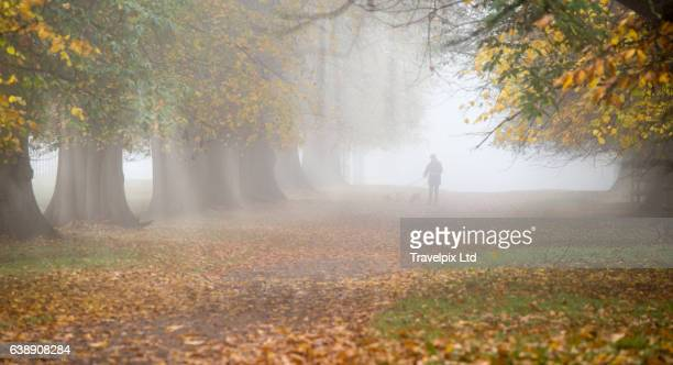 Avenue of Autumnal trees in mist