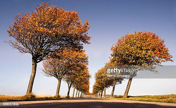 avenue of autumnal trees - bernd schunack stock pictures, royalty-free photos & images