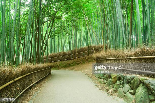 Avenue of Bamboo grove