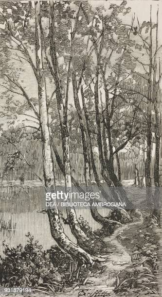 Avenue of beeches Middle Pond Burnham Beeches Buckinghamshire United Kingdom illustration from the magazine The Graphic volume XXIX n 755 May 17 1884
