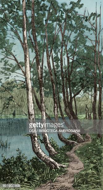 Avenue of beeches Middle Pond Burnham Beeches Buckinghamshire United Kingdom illustration from the magazine The Graphic volume XXIX n 755 May 17 1884...