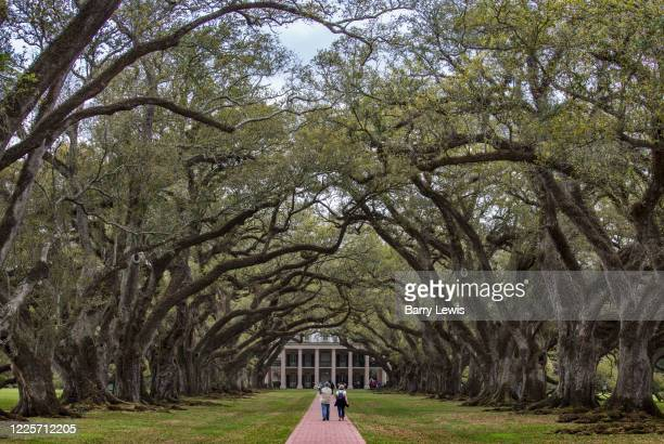 Avenue of oaks leading to the Oak Alley Plantation, a historic plantation located on the west bank of the Mississippi River on 10th April 2020 in...