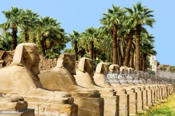avenue of rams, luxor, egypt - karnak fotografías e imágenes de stock