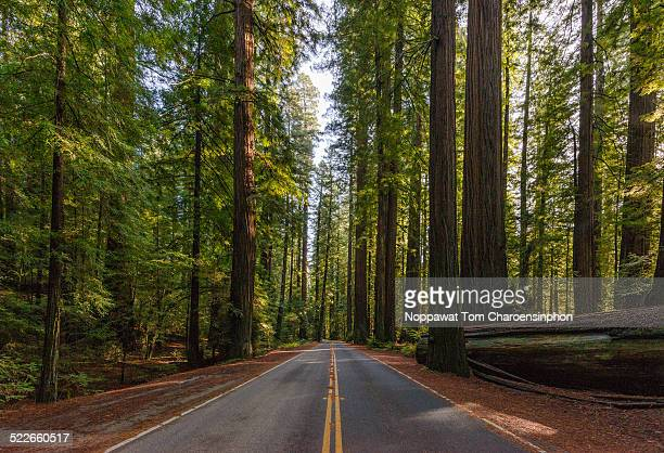 avenue of the giants california - humboldt redwoods state park stock photos and pictures