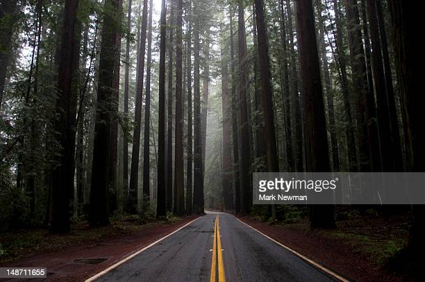 avenue of the giants. - humboldt redwoods state park stock photos and pictures
