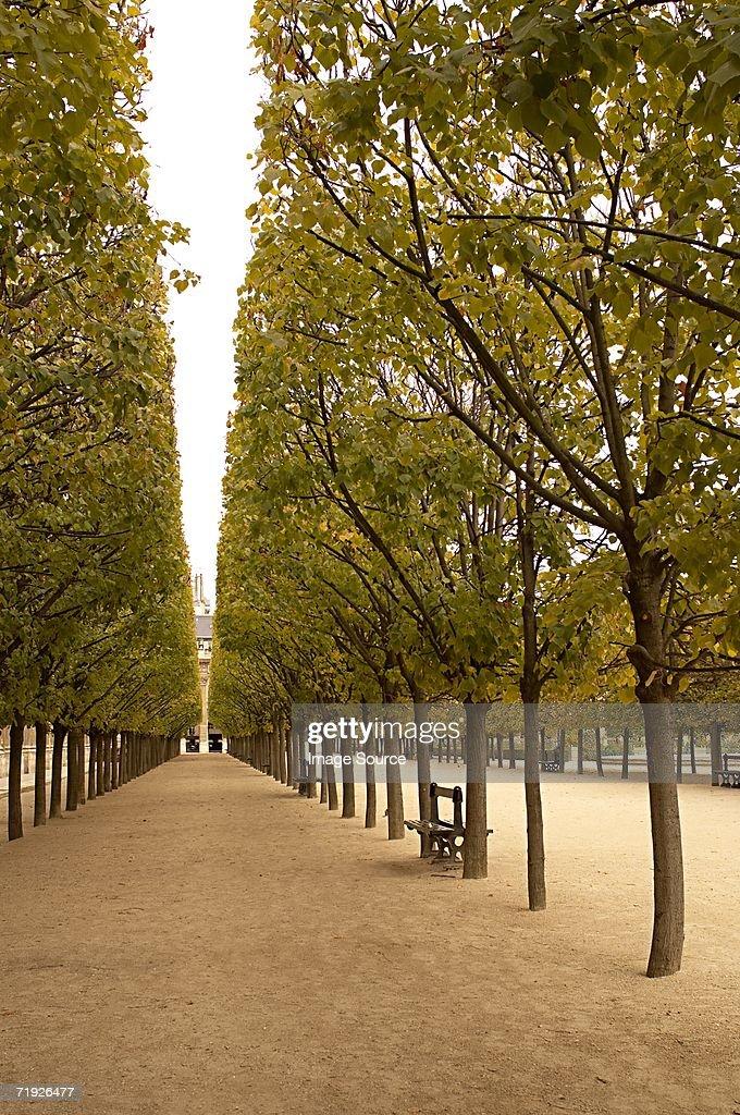 Avenue of trees at palais royal paris : Stock Photo