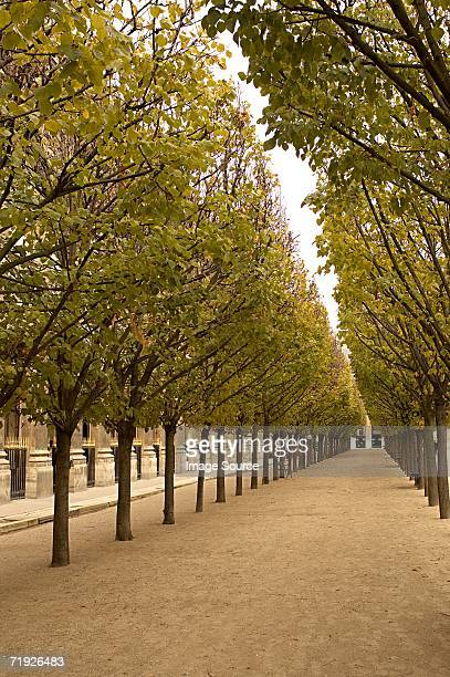 avenue of trees at palais royal paris - palais royal stock pictures, royalty-free photos & images