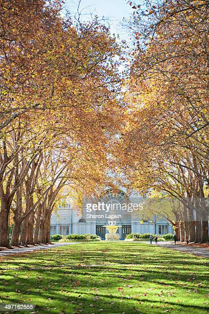 Avenue of trees glowing with a rich tapestry of autumn tones as they form an arch to the heritage fountain in Carlton Gardens.