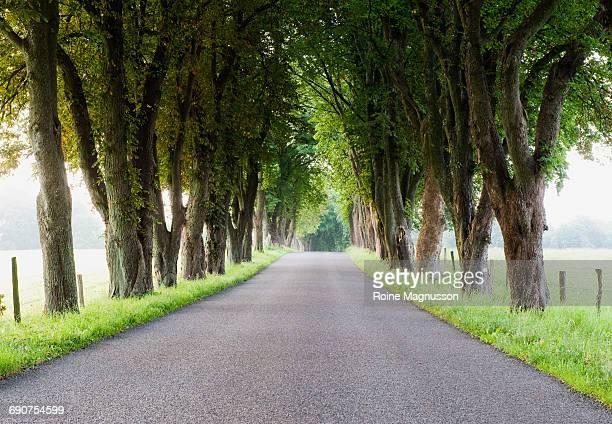 avenue of trees on road - descrição geral - fotografias e filmes do acervo