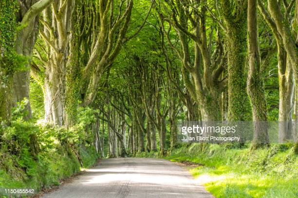 avenue of trees on the edge of dartmoor, uk. - deciduous tree stock pictures, royalty-free photos & images