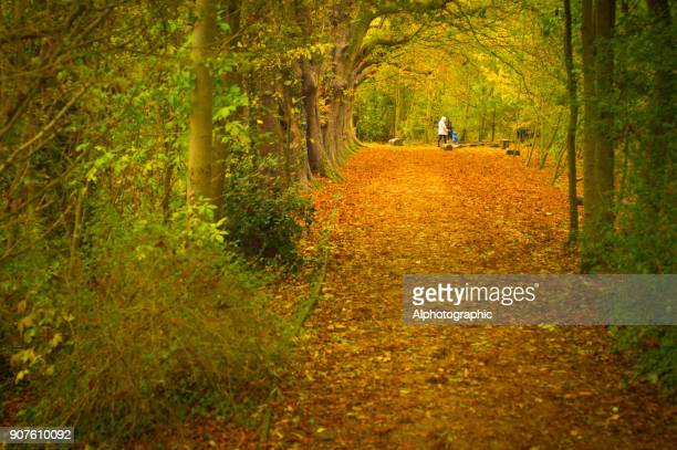 avenue through trees in a country park - camera point of view stock photos and pictures