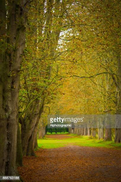 Avenue through trees in a formal garden