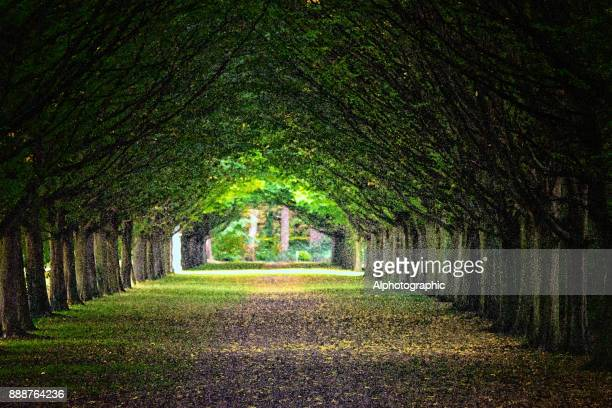 Avenue through trees in a formal garden