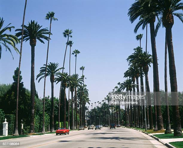 avenue with palms in beverly hills (usa) - beverly hills imagens e fotografias de stock