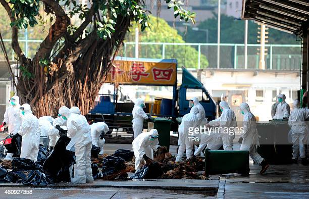 Avian influenza virus was found in a collection of live chickens which come from Guangdong and over 15000 live poultry being killed for this news on...