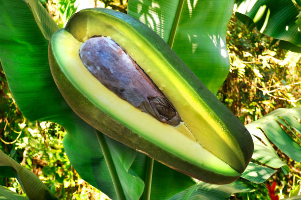 Avocado / Aguacate For Healthy Eating