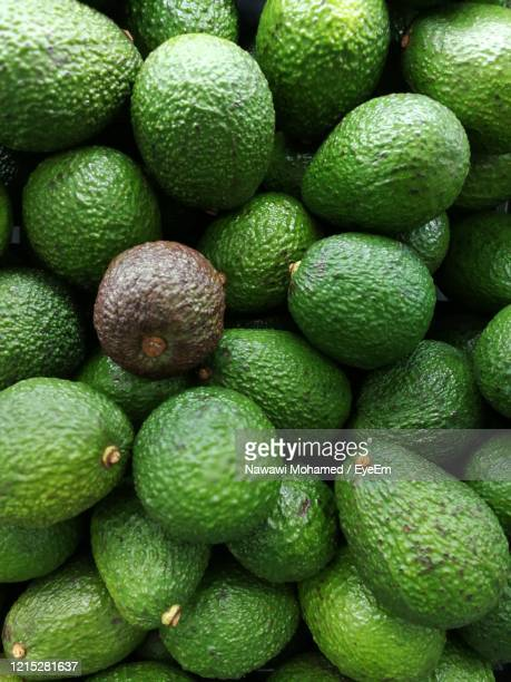 avocado background - avocado stock pictures, royalty-free photos & images