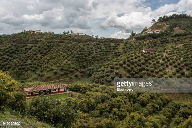 Avocado trees stand at a farm in San Vicente Antioquia department Colombia on Wednesday April 11 2018 The National Administrative Department of...