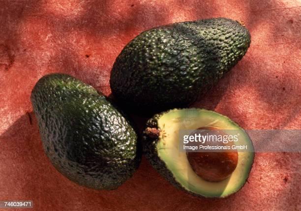 Avocados ( topic: Lentres gardens)