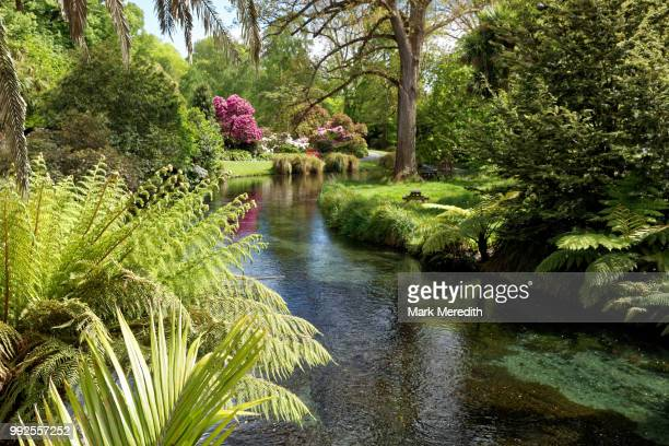 avon river and botanical gardens in hagley park, christchurch - christchurch stock pictures, royalty-free photos & images