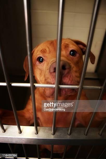 awaiting adoption - dog pound stock pictures, royalty-free photos & images
