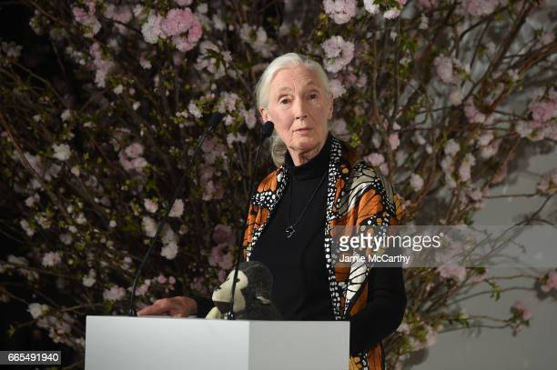 Award winner Jane Goodall speaks onstage at the 2017 DVF Awards at United Nations Headquarters on April 6, 2017 in New York City.