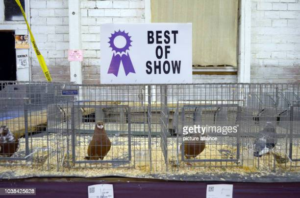 Award winning poultry being presented at the agricultural show Oregon State Fair in Salem US 28 August 2016 The 'State Fair' is a mix between a folk...