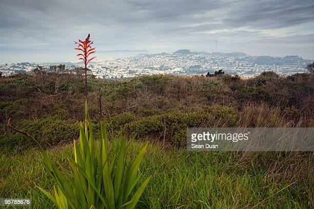 away from the city - san bruno stock photos and pictures
