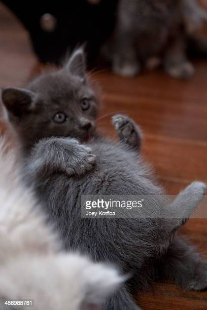 awkward pet portraits - animal abdomen stock photos and pictures