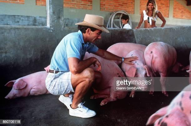 Ayrton Senna avec des cochons dans une ferme près de Sao Paolo le 15 février 1994 Brésil