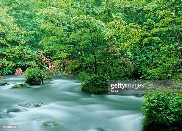 azalea and mountain stream - heather brooke ストックフォトと画像