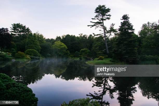 azalea garden - charca fotografías e imágenes de stock