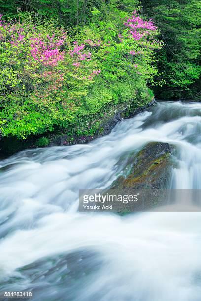 azalea trees by river - heather brooke ストックフォトと画像