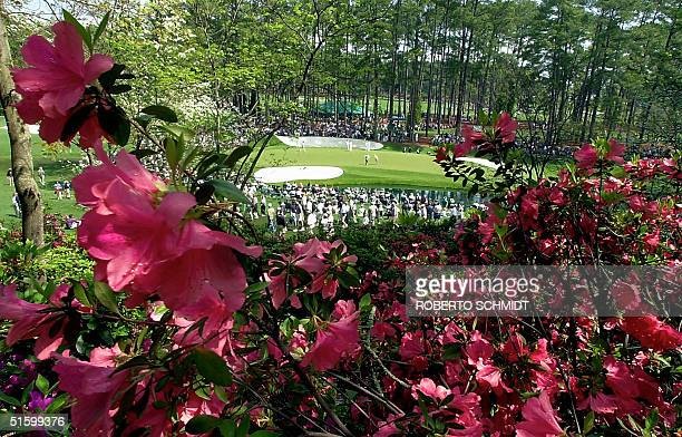 Azalea's frame the 16th green 04 April 2001 during the final practice round for the 2001 Masters Golf Tournament at the Augusta National Golf Club in...