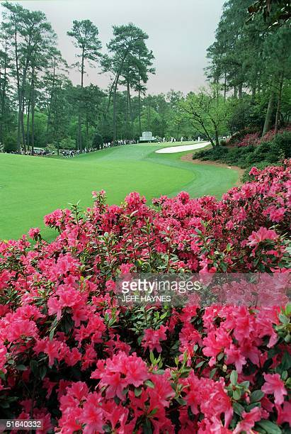 Azaleas in full bloom line of the 10th fairway 08 April at the Augusta National Golf Course in Augusta GA The 1998 Masters golf tournament starts 09...