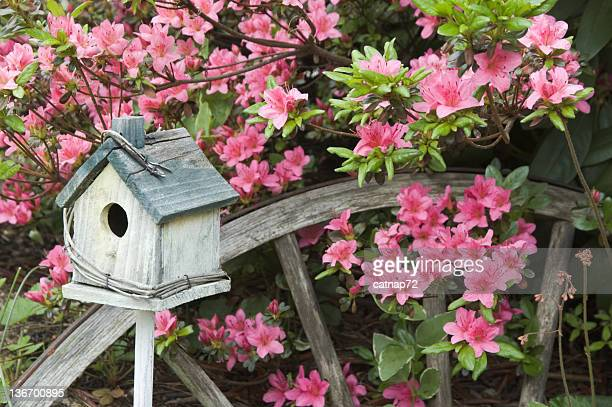 azaleas in spring with garden decorations, landscaping close up - birdhouse stock pictures, royalty-free photos & images