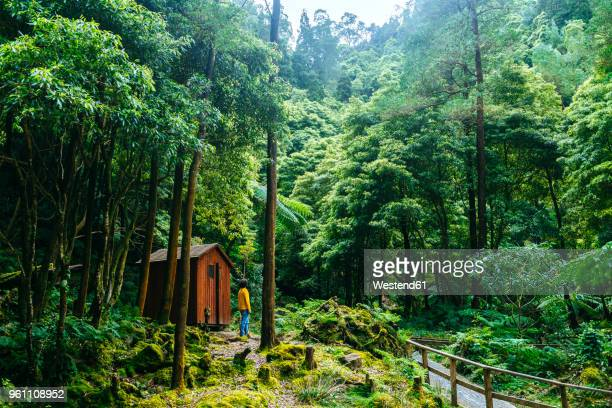 azores, sao miguel, man in the forest of caldeira velha - azores stock photos and pictures