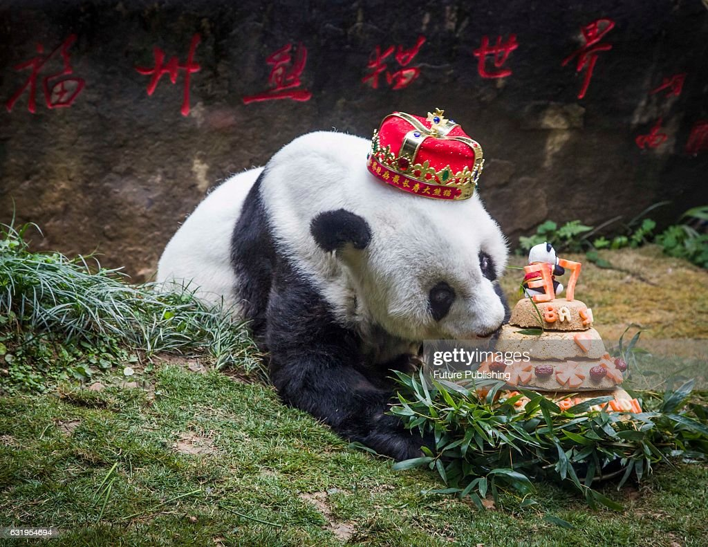 Fuzhou Panda World Stock Photos And Pictures Getty Images