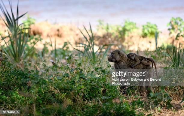 Baboon and Young Against Lush Foliage at Samburu, Kenya