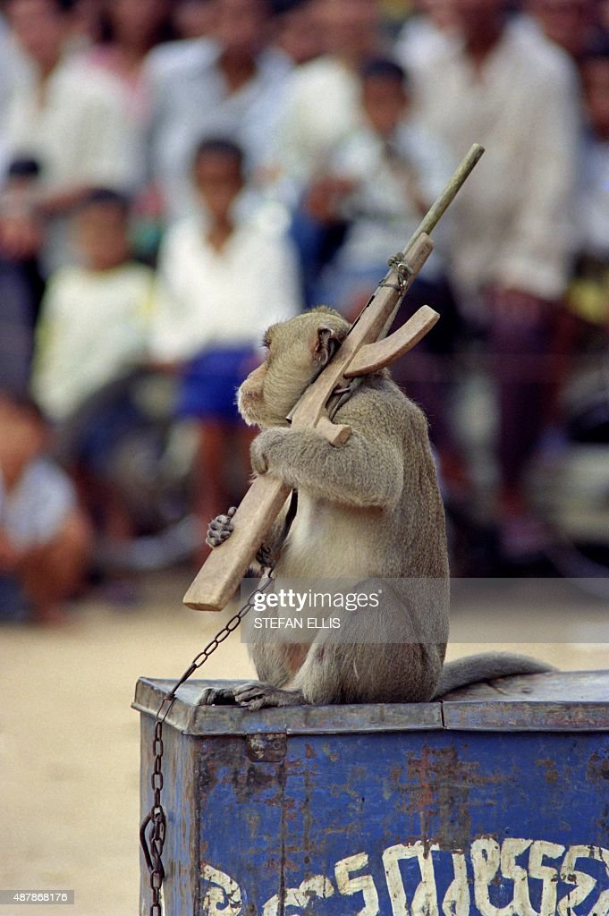 A Baboon holds an arm toy AK-47 during a circus show, on August 1, 1993, in Phnom Penh.