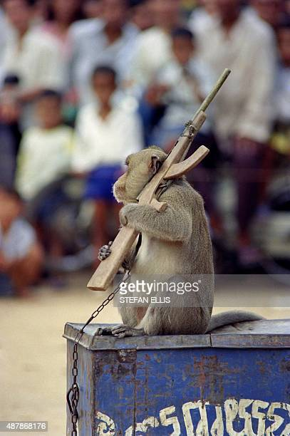 A Baboon holds an arm toy AK47 during a circus show on August 1 in Phnom Penh