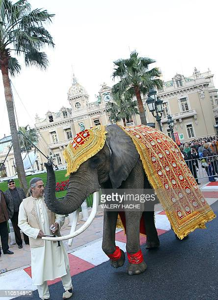 Baby a female elephant aged 21 walk in front of the Monte Carlo Casino as part of the celebration for the wedding of Indian couple Gaurav Assoumul...