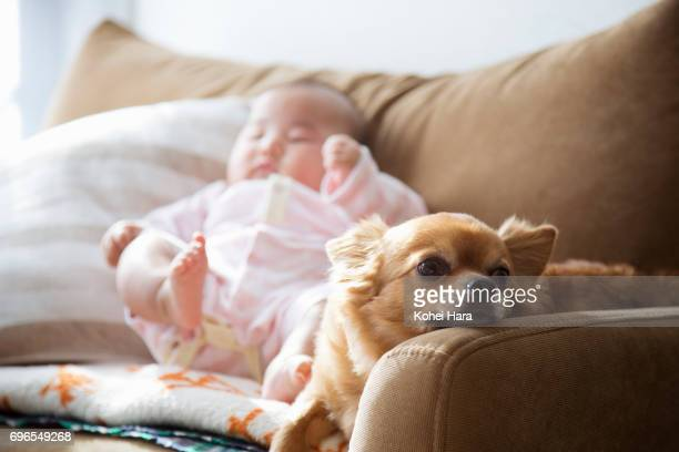 Baby and dog relaxed on the sofa