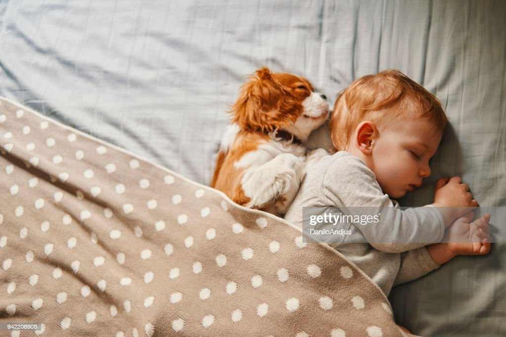baby and his puppy sleeping peacefully : Stock Photo